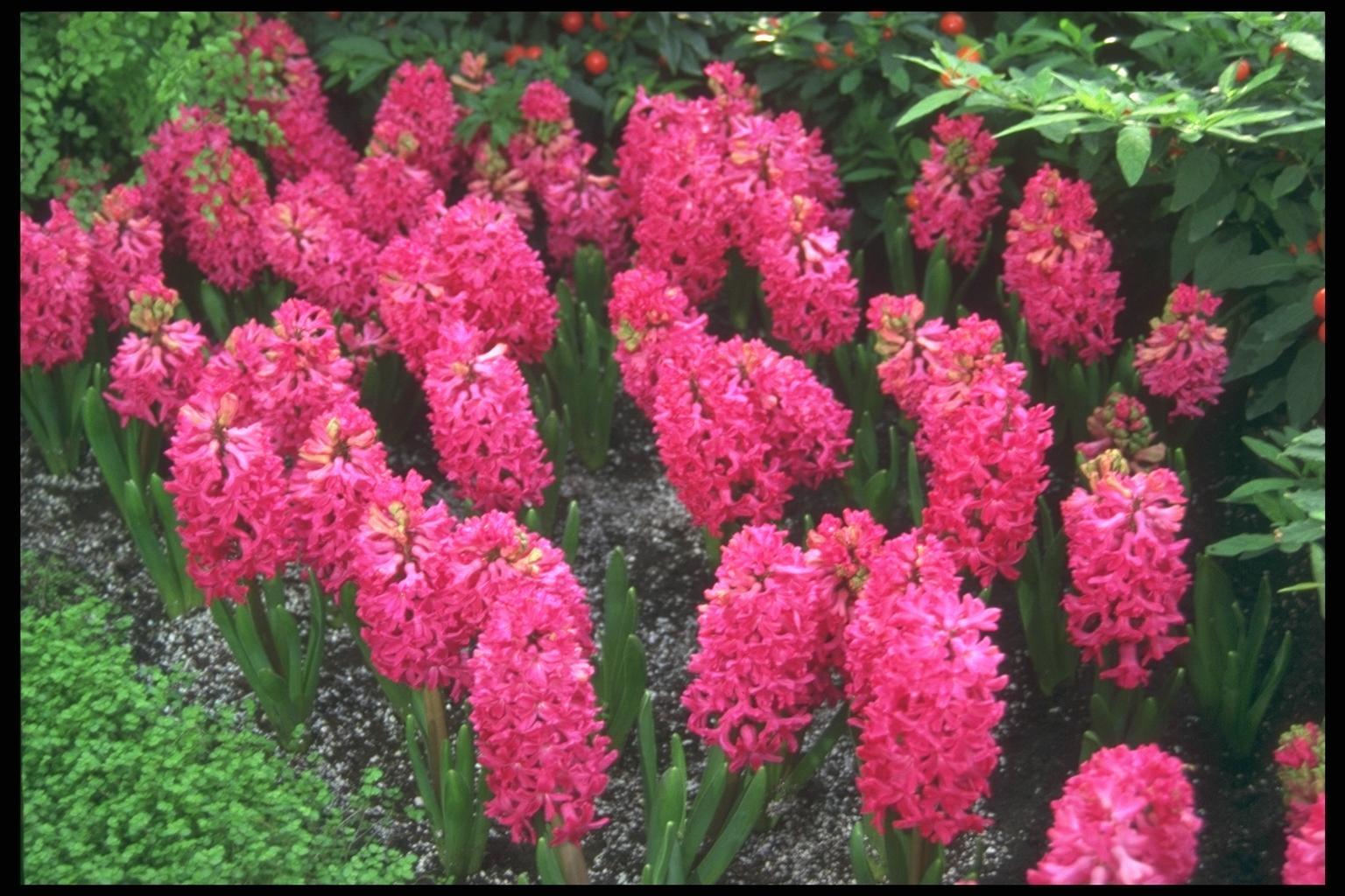 Цветущие цветы в мае фото с названием